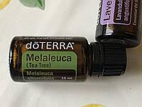 Чайное дерево - эфирное масло doTERRA США (Melaleuca alternifolia), 15 мл