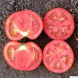 Семена томата Джем F1 (100 сем.) Ergon, фото 2