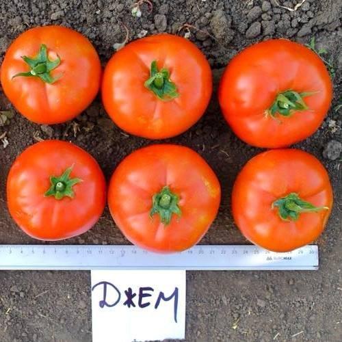 Семена томата Джем F1 (100 сем.)
