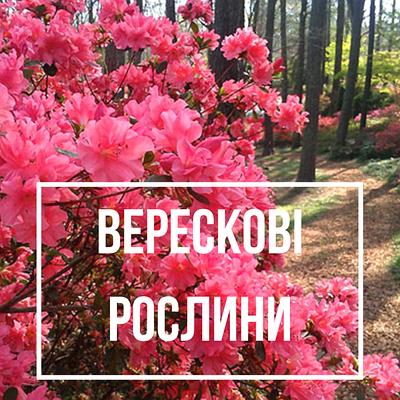 Верескові рослини