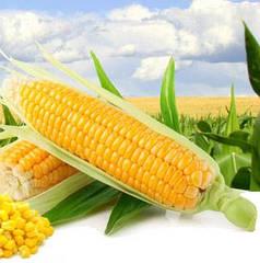 Кукуруза сахарная Багратион F1 100г