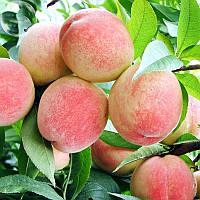 Egrow 5Pcs/Pack Персиковое дерево Семена Сад Карликовые бонзанские сладкие персики Бонсай фруктовые растения Семена 1TopShop