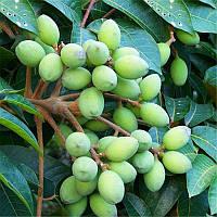 Egrow 8Pcs/Сумка Оливковое дерево Семена Semente Растения Многолетники Вкусные Сад Фруктовые семена 1TopShop