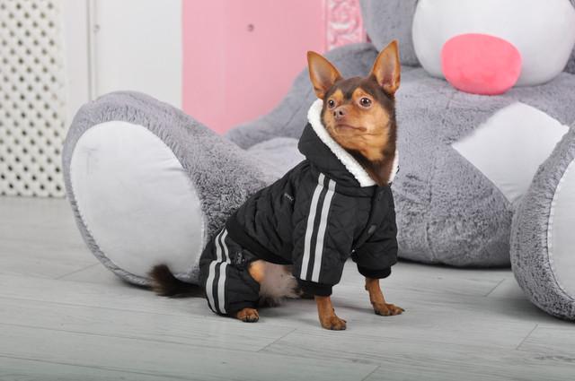24e358c0af36 Интернет Магазин Одежды для собак