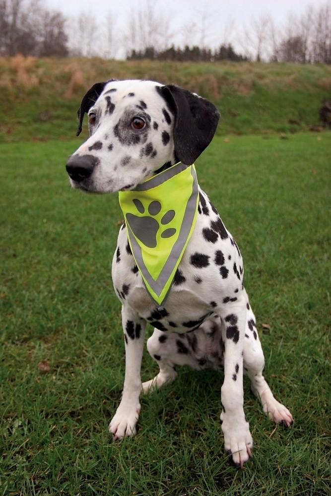 Бандана Trixie Neckerchief для собак светоражающая L-XL