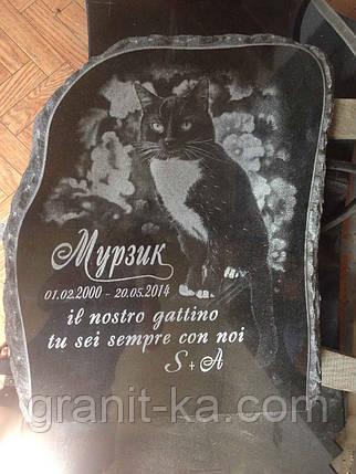 Памятник коту, фото 2