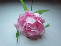 Роза распущенная нежно-розовая, диаметр цветка 5 см