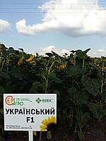 Семена подсолнечника УКРАЇНСЬКИЙ F1