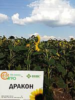 Семена подсолнечника Дракон, устойчивый к Гранстару
