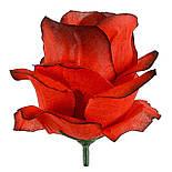 Рита-Роза итальянка, 9см (по 30 шт. в уп), фото 8