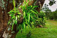 Микотрофность растений