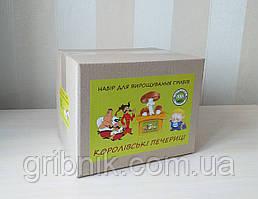 Грибная коробка для выращивания королевских шампиньонов 3 в 1
