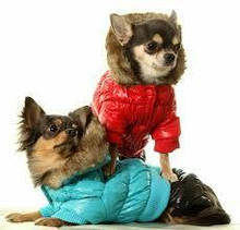 Одяг та взуття для собак
