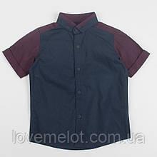 """Рубашка с коротким рукавом для мальчика на рост 92см 104см 128см нарядная Next """"Лоск"""" для мальчика"""