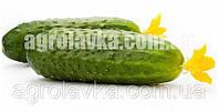 Огірок партенокарпічний Стінгер F1 (45 дні) для відкритого грунту (100нас.) Lark Seeds