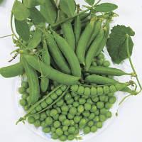 Семена гороха овощного Кингсайз (2500 с.) Lark Seeds