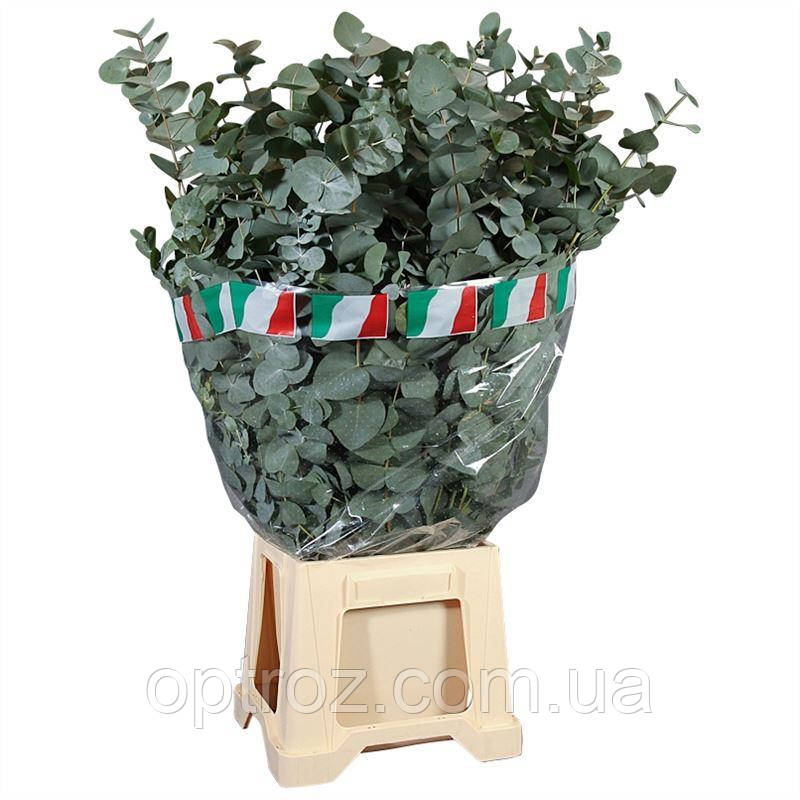Оптовые склады цветов одесса, букеты учителю на 1 сентября фото