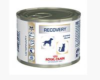 Royal Canin Recovery Canine/Feline 195 г х 12 шт Влажный корм для собак и кошек в период после болезни
