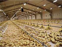 Светодиодное управляемое освещение для птичников / птицефабрик / курятников. Идеален для птицеводства.