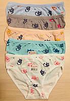 Трусики-плавки детские для девочек хлопок Donella Турция размер 5-7 лет