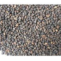 Семена водяного шпината (ипомеи водяной) для проращивания 100 г
