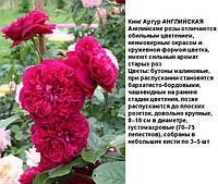 Кинг Артур АНГЛИЙСКАЯ