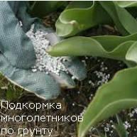 Удобрения для внесения по поверхности грунта