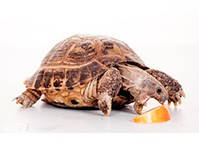 Корма для рептилий