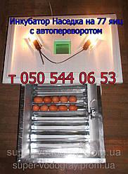 Инкубатор Наседка с автоматическим переворотом на 70  яиц