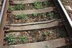 Рельс железнодорожный Р-50 б/у 4-5мм (старопригодный)