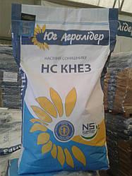 Семена подсолнечника НС КНЕЗ стойкий к заразихе A-G+