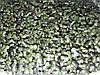 Микрозелень растущая, КАПУСТА ФИОЛЕТОВАЯ