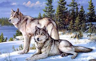 Наборы алмазной вышивки - волки