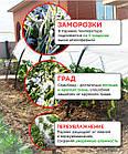 Парник Пролісок 6м, фото 3