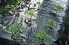 Агроткань AGROJUTEX 2,1*100м 100 гр.м2, фото 6