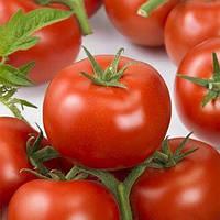 Ронда F1 томат індетерм. 100 нас, Ergon seeds