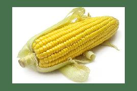 Насіння кукурудзи Оржиця (Фао 240)