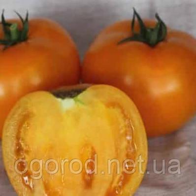 Айсан F1(КС 18) семена томата низкорослого жёлтого Kitano 500 шт