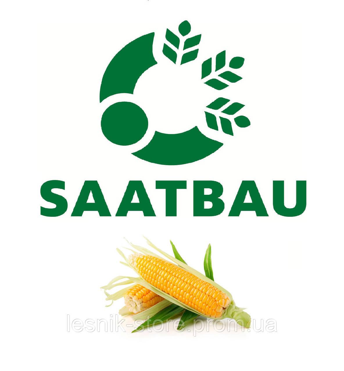 Семена кукурузы, Saatbau, Данубио