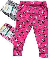 Лосини для дівчаток оптом, Disney , розміри 6-36мес, арт. 91032