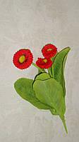 Куст бархатной маргаритки красной