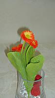 Куст бархатной маргаритки оранжевый