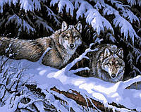 Картина раскраска по номерам на холсте 40*50см Babylon VP121 Волки в лесу