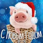 С Новым годом Свиньи 2019!!