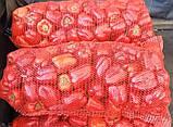 Мадонна F1 семена сладкого перца Clause Франция 500, 1000 шт., фото 5