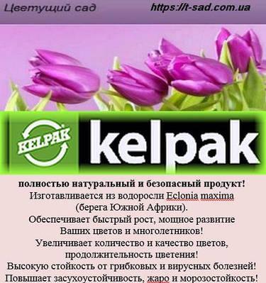 Келпак – органический биостимулятор роста растений!