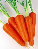 Семена моркови СВ 3118 ДШ F1 (SV 3118 DH F1) (фракция 1,6-1,8) 200 000 семян Seminis (Голландия)