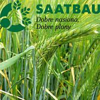 Семена ярового ячменя, сорт Вильма, селекция Saatbau
