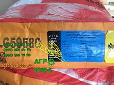 Семена подсолнуха ЛГ 59580, фото 2