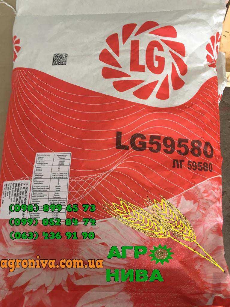 Семена подсолнуха ЛГ 59580